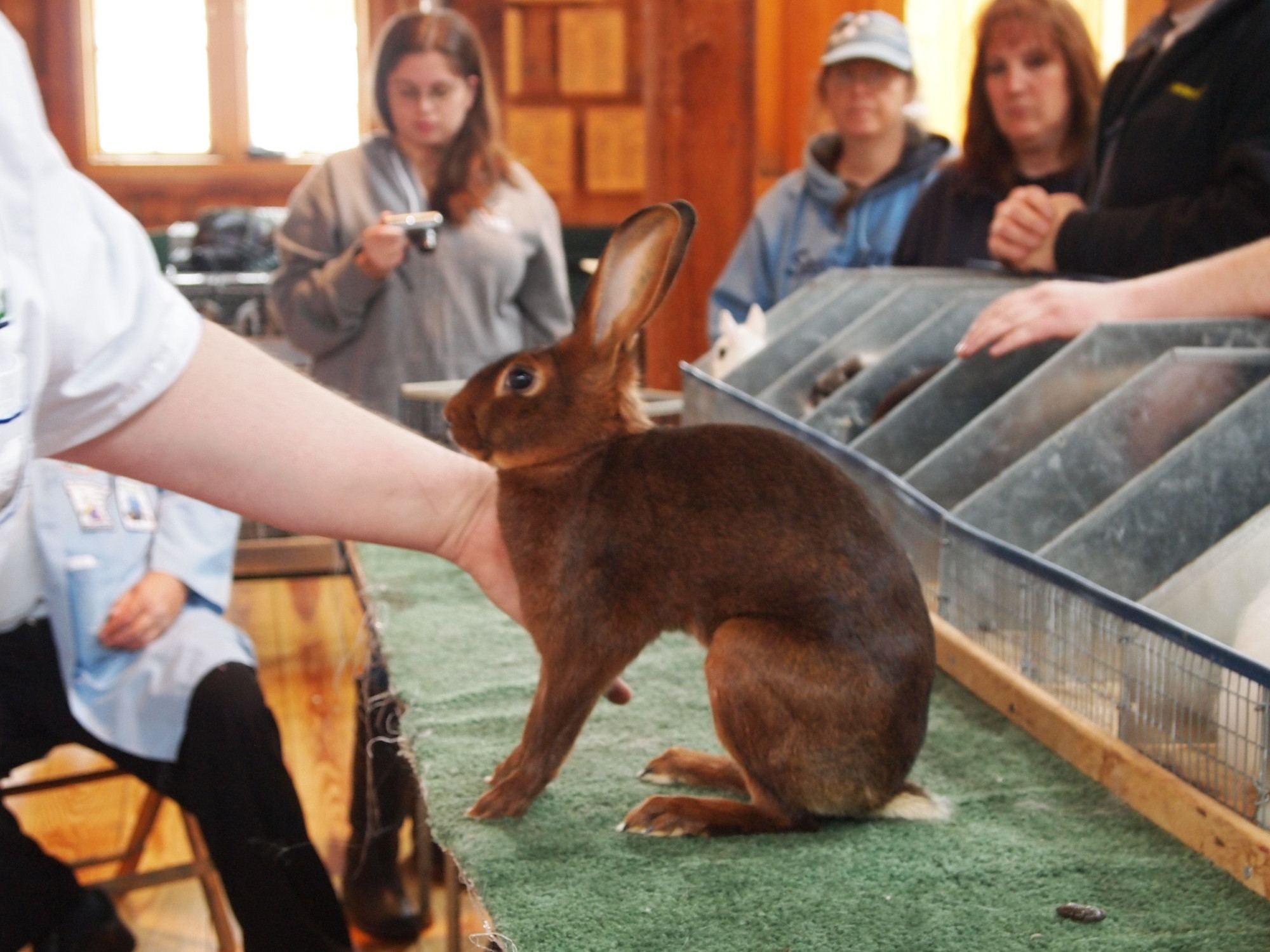 All wars: Old Bethpage Village Restoration hosts The Long Island Rabbit Breeders Association's annual show, a springtime tradition for breeders and visitors.
