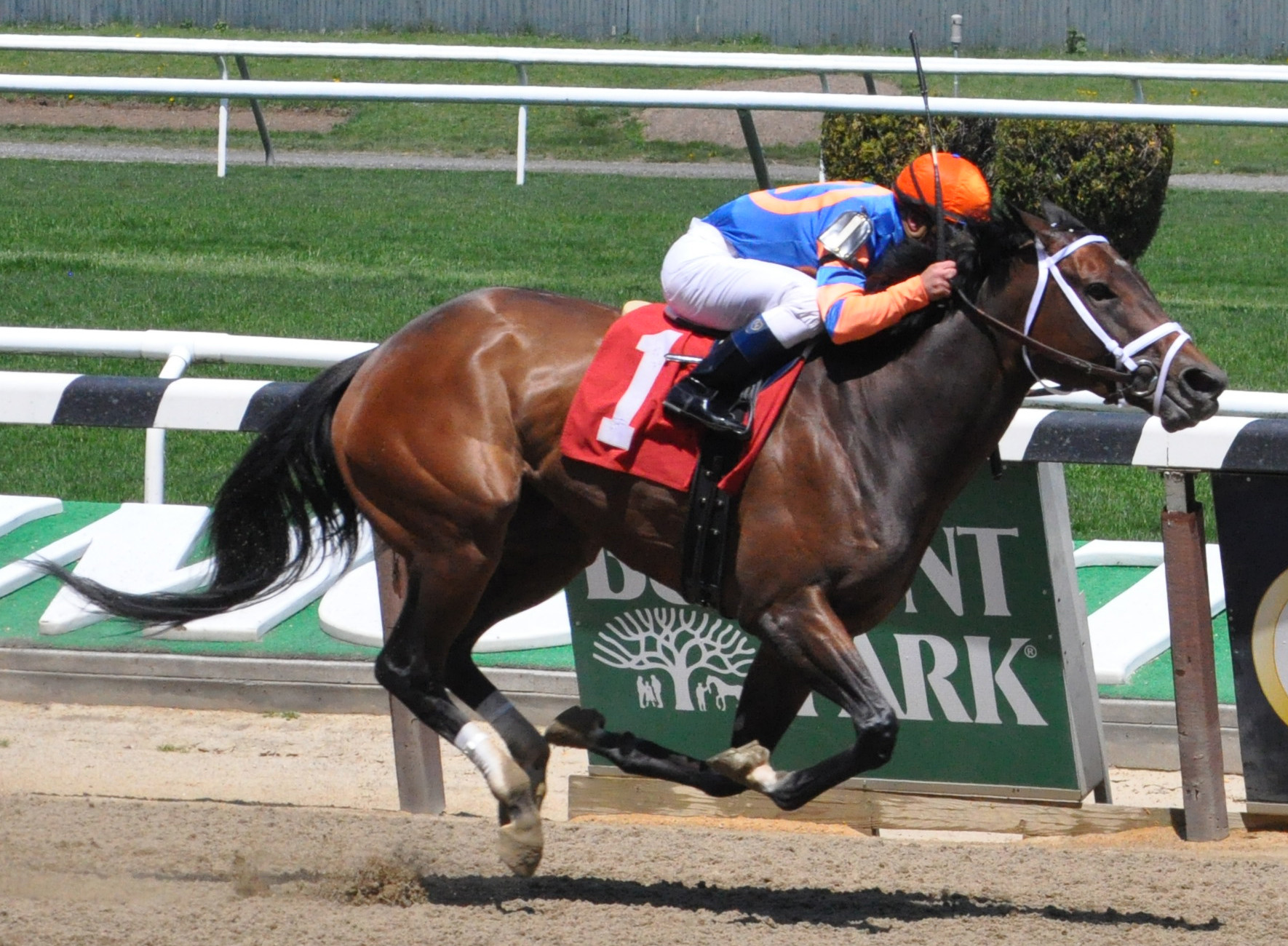 Read The Research, with jockey Javier Castellano aboard, took the 2013 Belmont Spring/Summer Meet opener.
