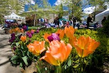 The season's spring forth at Hofstra's Dutch Festival.