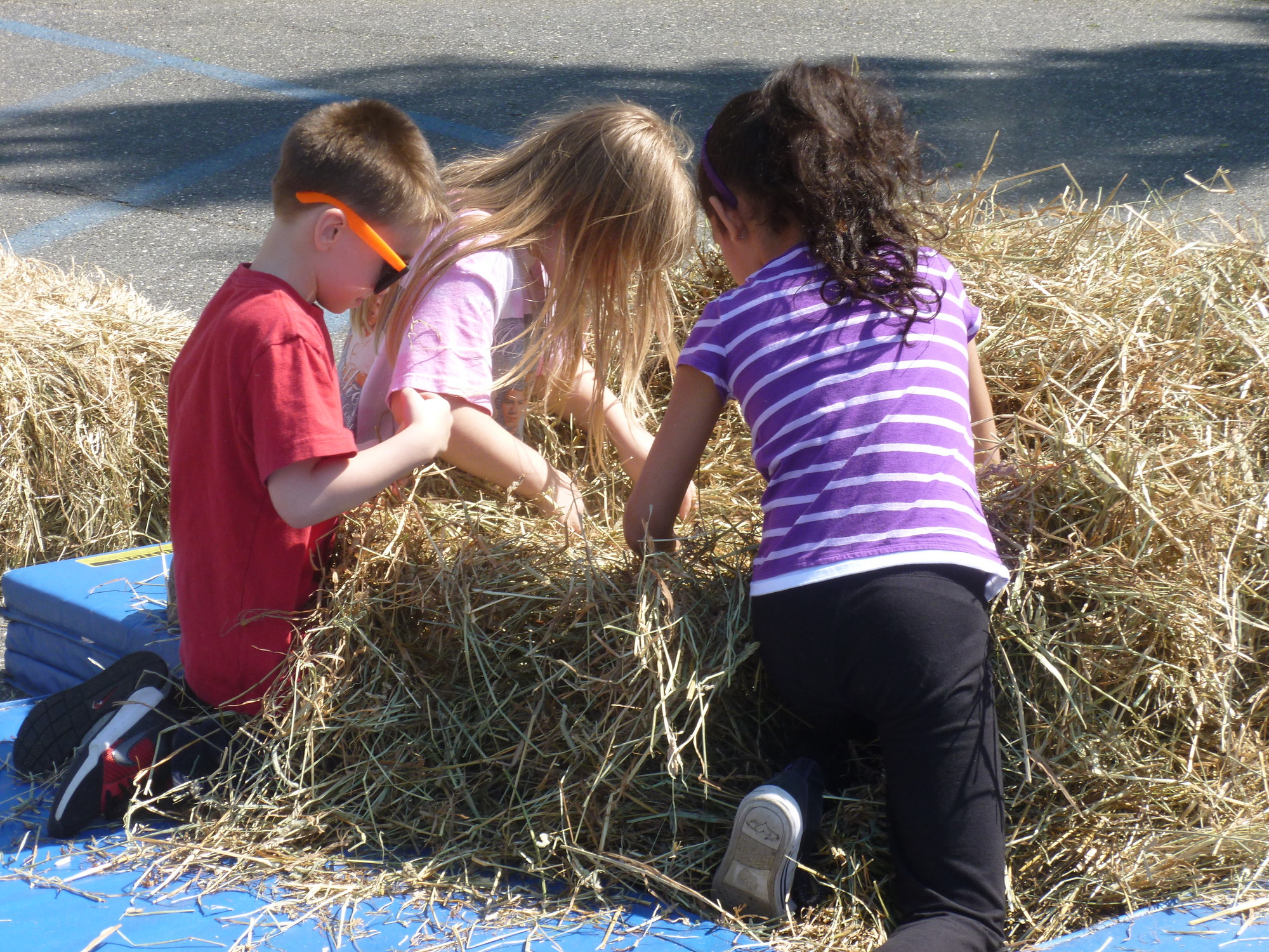 "Students dug in the haystack in a game of ""find the nickel."""