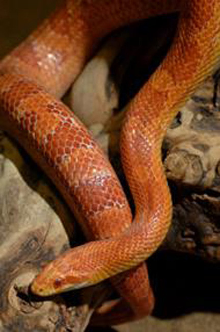 Reptiles are the main sttraction at Theodore Roosevelt Sanctuary & Audubon Center on Sunday.