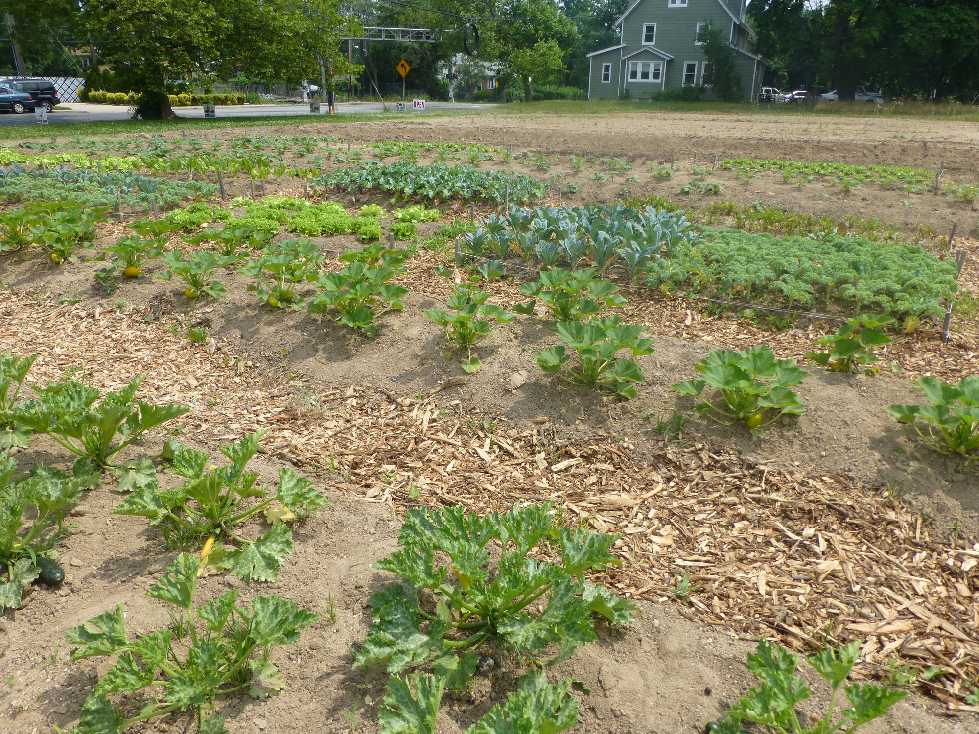 The fields sprouted a variety of summer vegetables, including kale, eggplant, potatoes, squash, cabbage, carrots, broccoli, cucumbers and sweet corn.