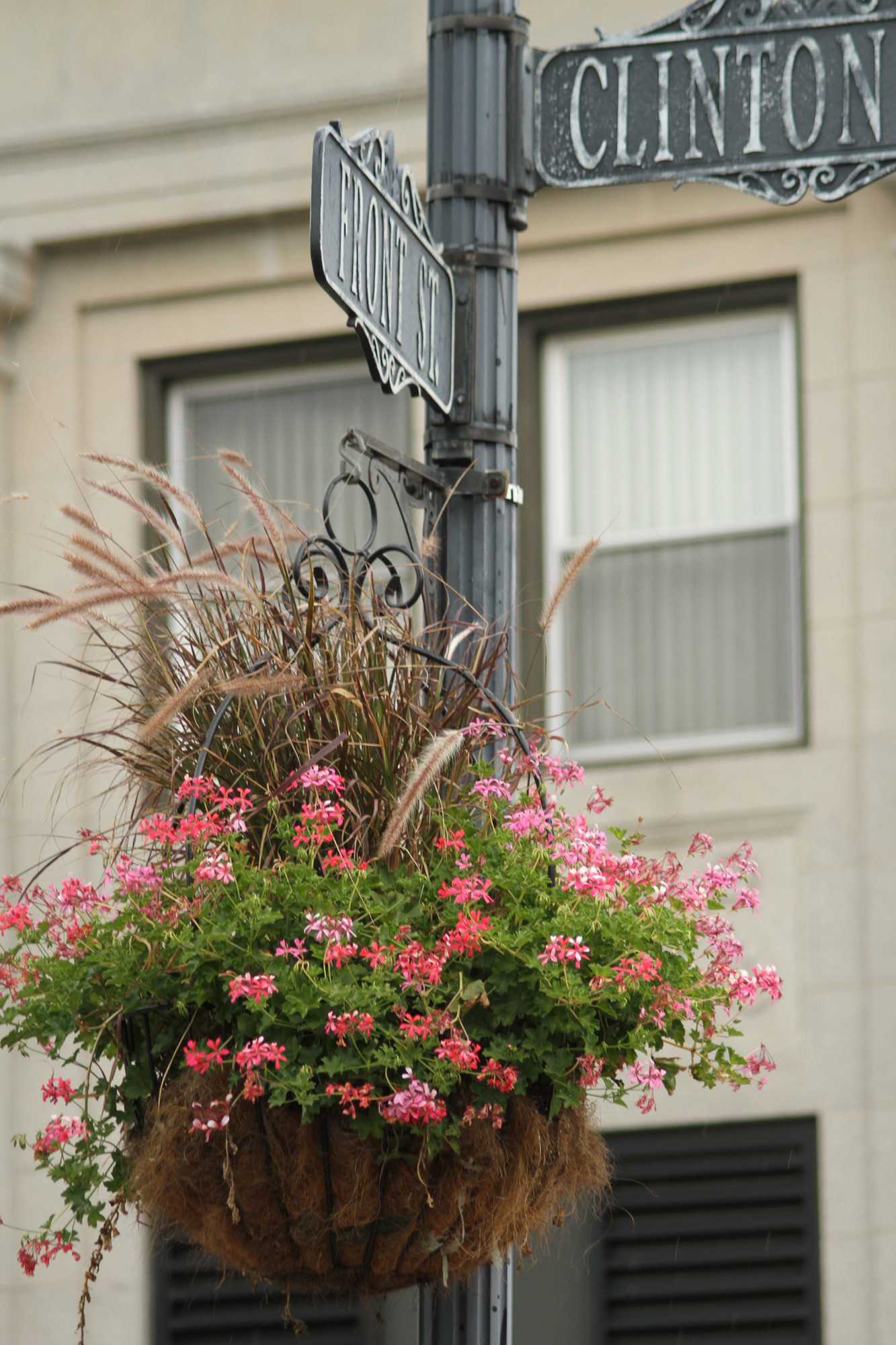 The chamber paid to have 47 flowering baskets hung on the streets in the downtown area.