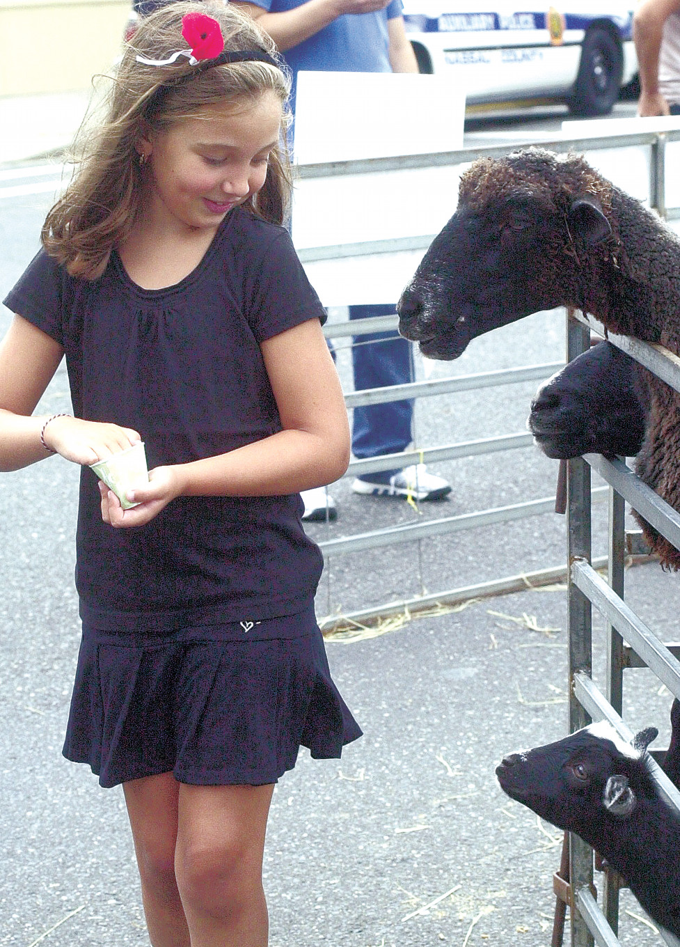 Sophia Bruccoleri fed the goats at the 2012 Merrick Fall Festival. The petting zoo will return to this year's fair, which is set for Sept. 27 to 29.