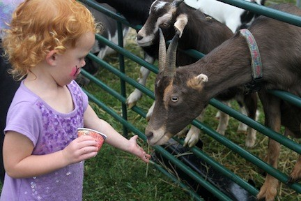 Ava Onorato feeds the goats.