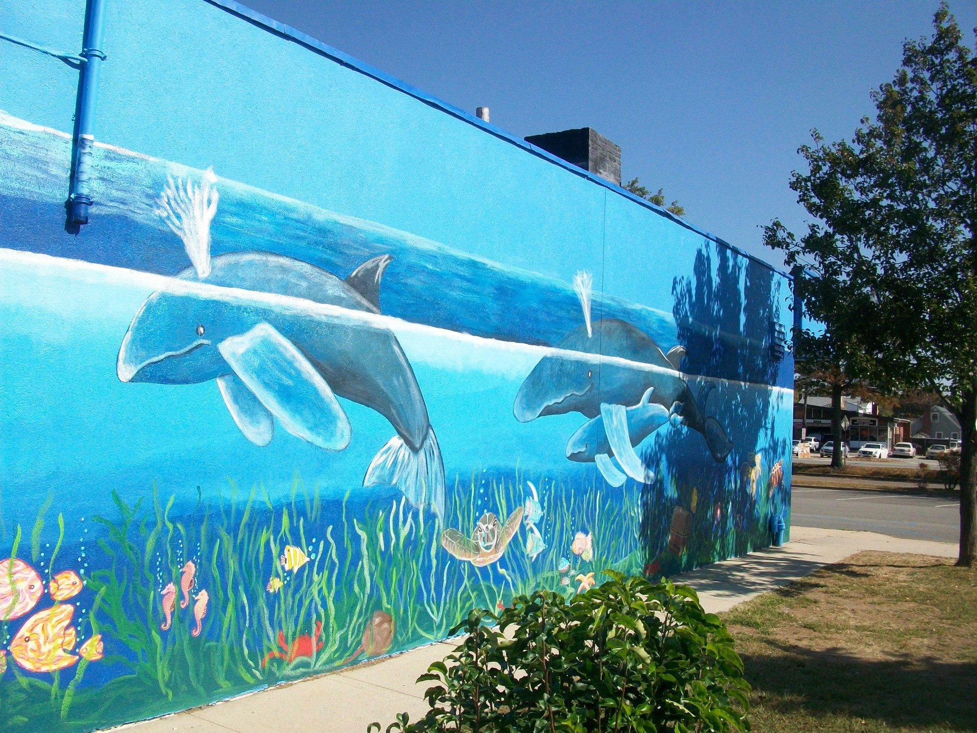 The vibrant, ocean-themed mural, painted by six local Girl Scouts with the help of a professional artist, is on the side wall of Carvel in Salisbury