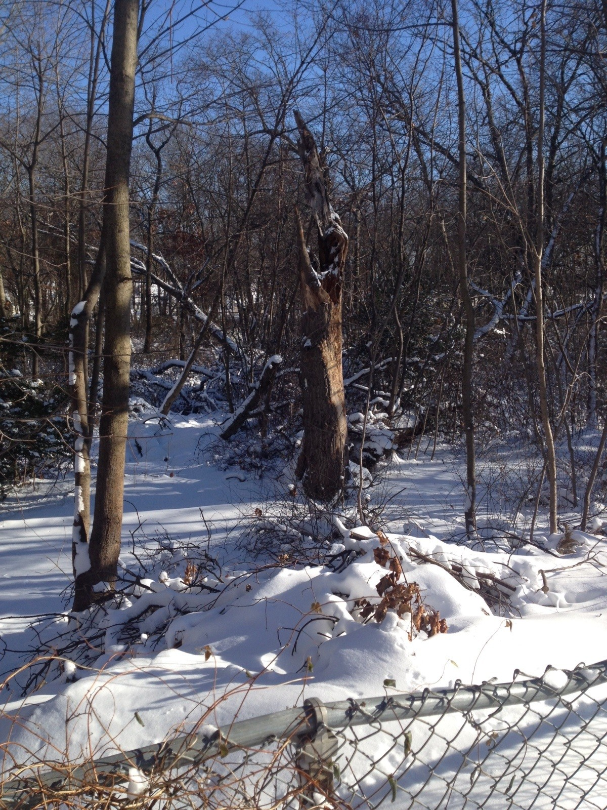 Snow blanketed the Tackapausha Nature Preserve.