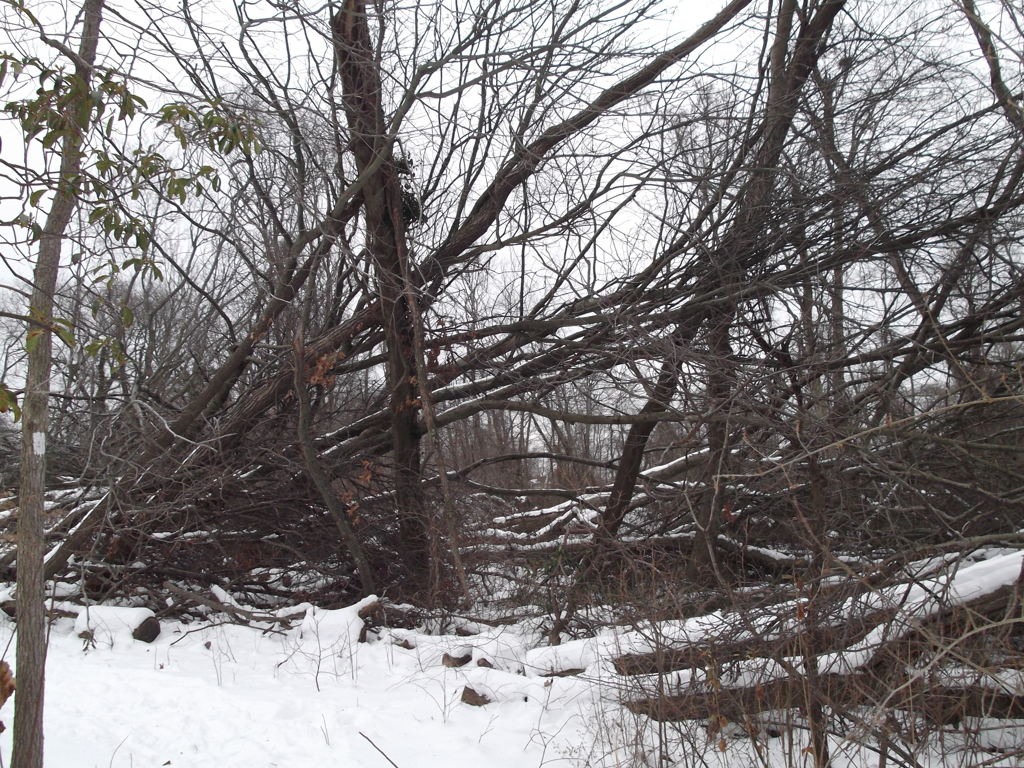 Residents have expressed concerns about the downed trees at the preserve, as well as vandalism and drug use there.