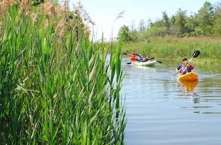 The Western Bays provide many recreational opportunities such as kayaking, but scientists say that fertilizer runoff and partially treated sewage effluent threaten the health of the bays. Above, a wetland canal at Norman J. Levy Park and Preserve in Merrick.