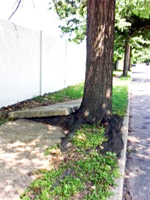 Trees are coming down along Seaman's Neck Road in North Wantagh to repair broken sidewalks.