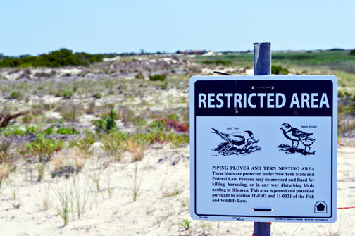 A restricted area is for the safety of the piping plovers.