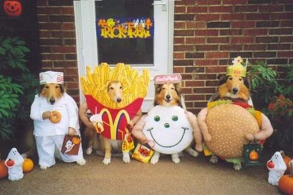 Keep your pet safe this Halloween