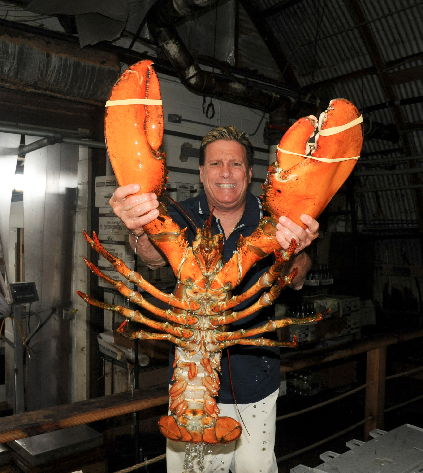 23 Pound Lobster Arrives In Island Park Herald Community Newspapers Www Liherald Com
