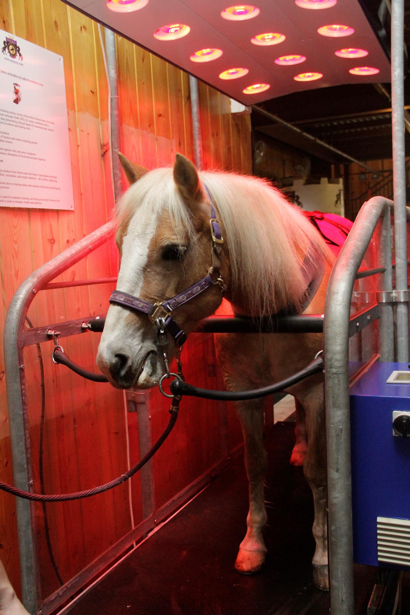 Rehabilitation For Equine Athletes Herald Community