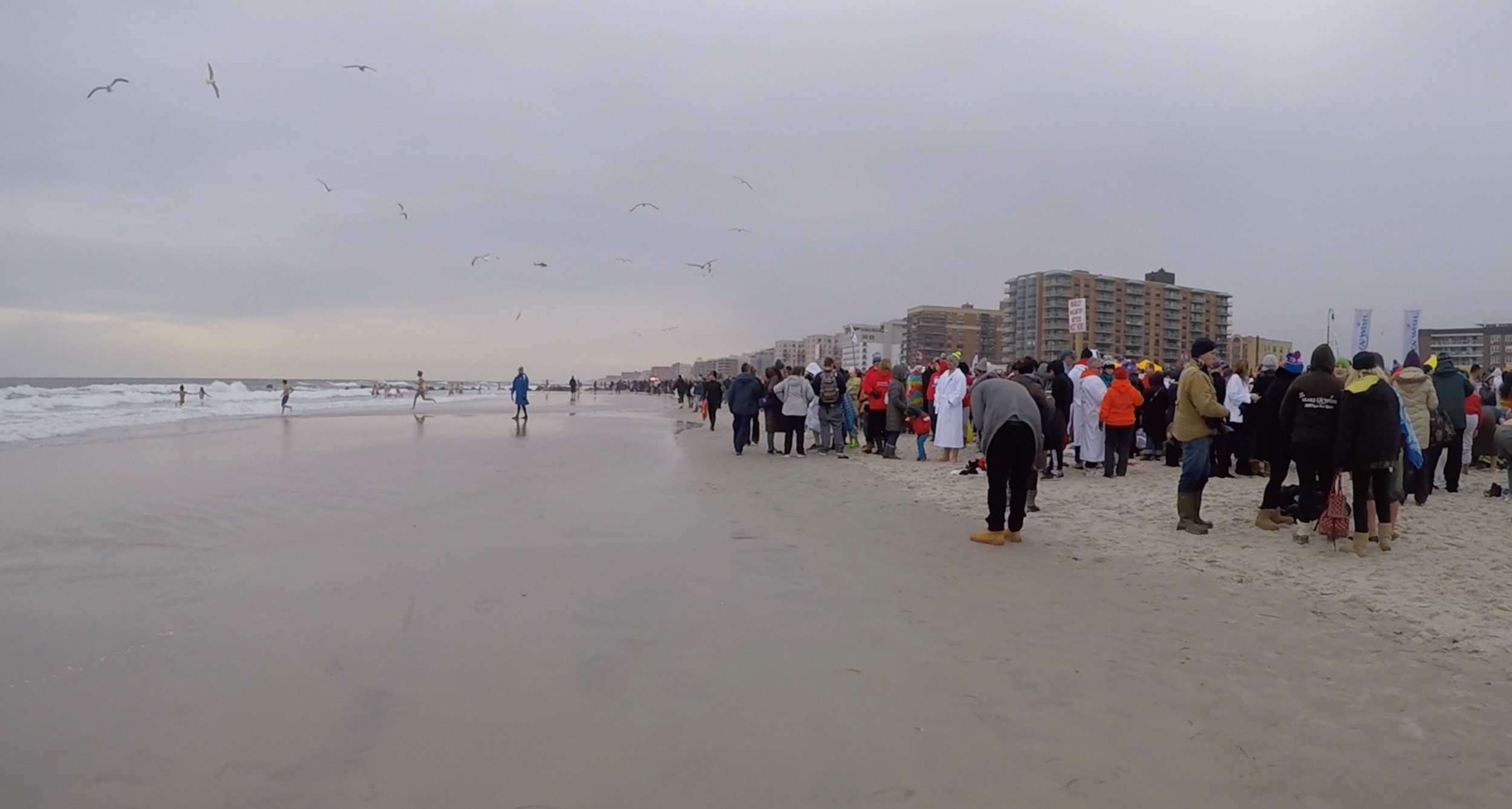 Over 15,000 people lined the shore of Long Beach to join the Long Beach Polar Bears at their annual fundraiser.