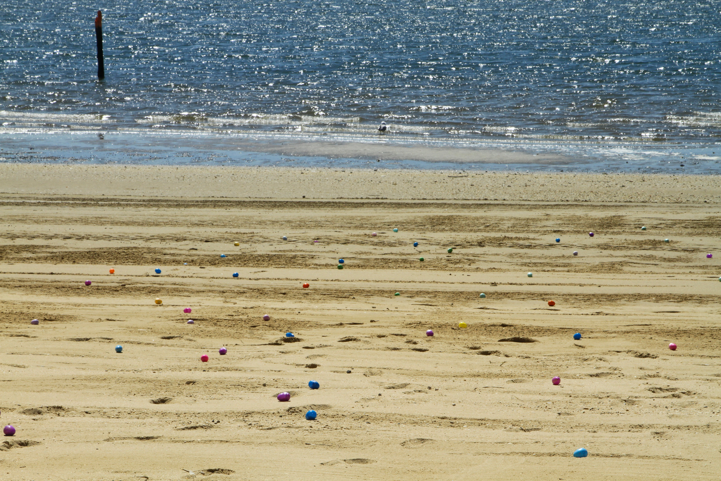 About 1,200 eggs lined the sandy Hewlett Point Park Beach at the annual egg hunt.