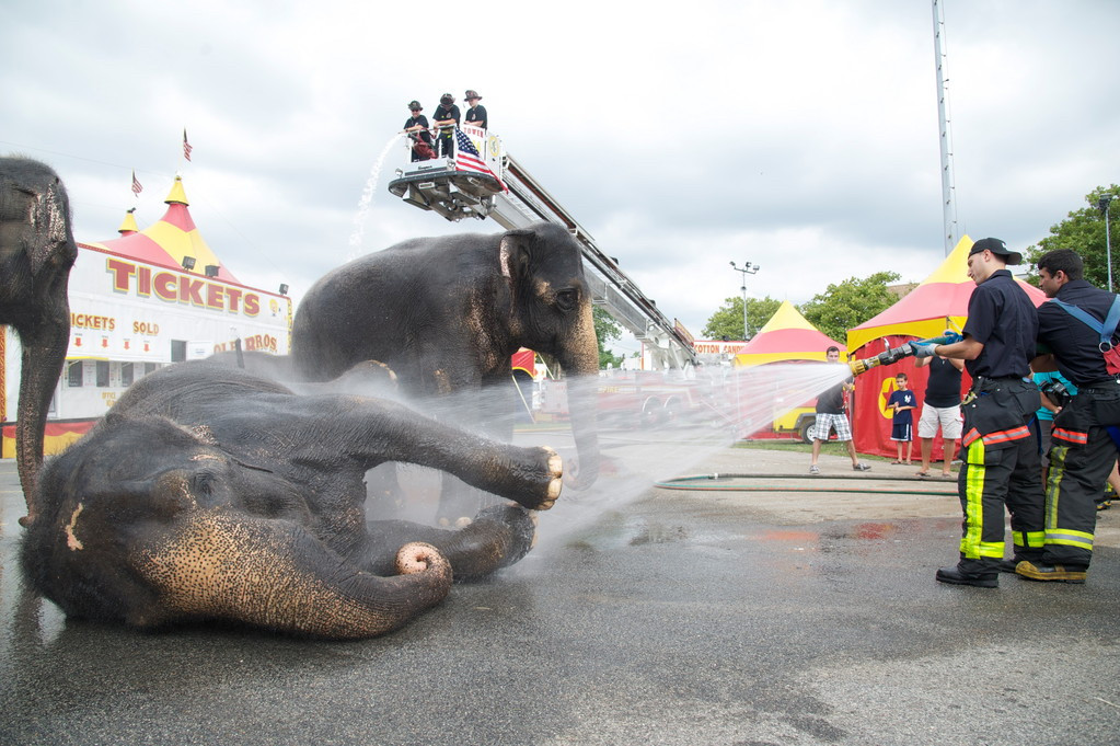 Elephants got a wash down at The Cole Brothers Circus — which shut down in 2016 — at Fireman's Memorial Field in Oceanside in 2012. PETA and other animal rights activists condemn these publicity stunts, saying they abuse the animals.