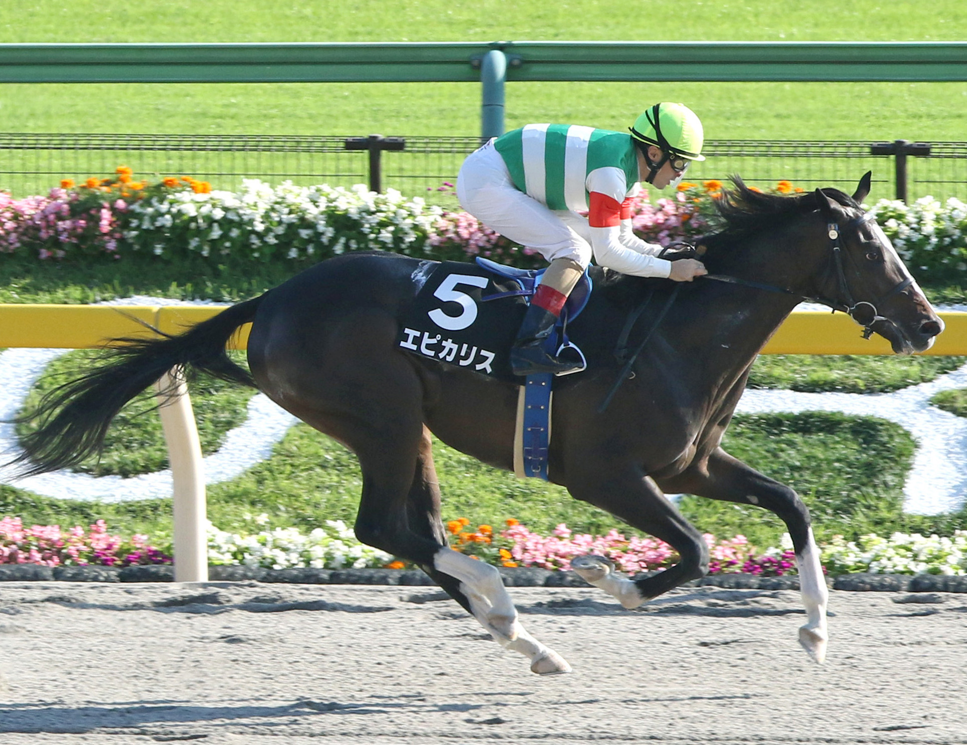 Japanese invader Epicharis will make his North American debut in the Belmont Stakes this Saturday.