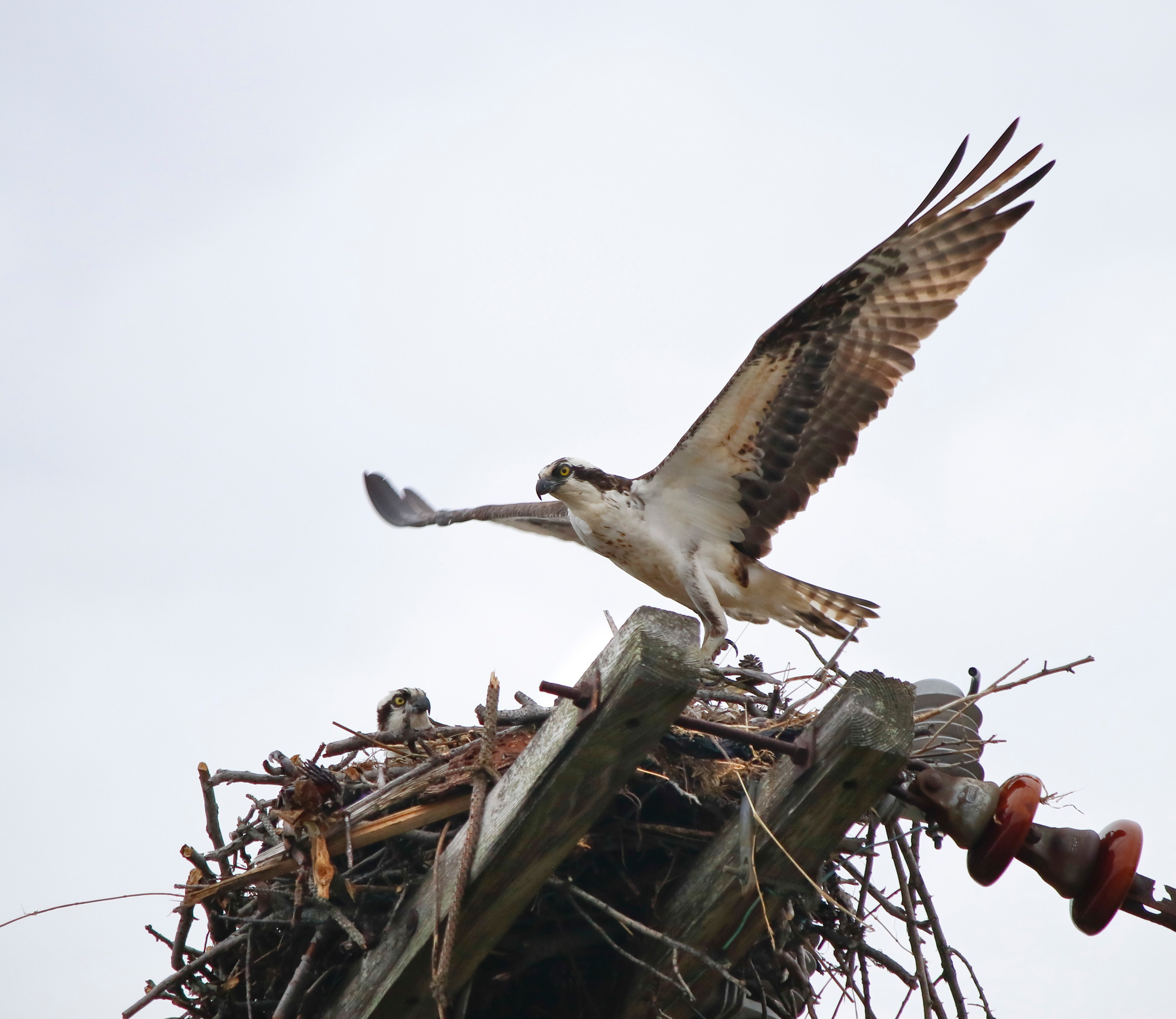 An osprey nesting platform stands tall over the Oceanside Marine Nature Study Area.