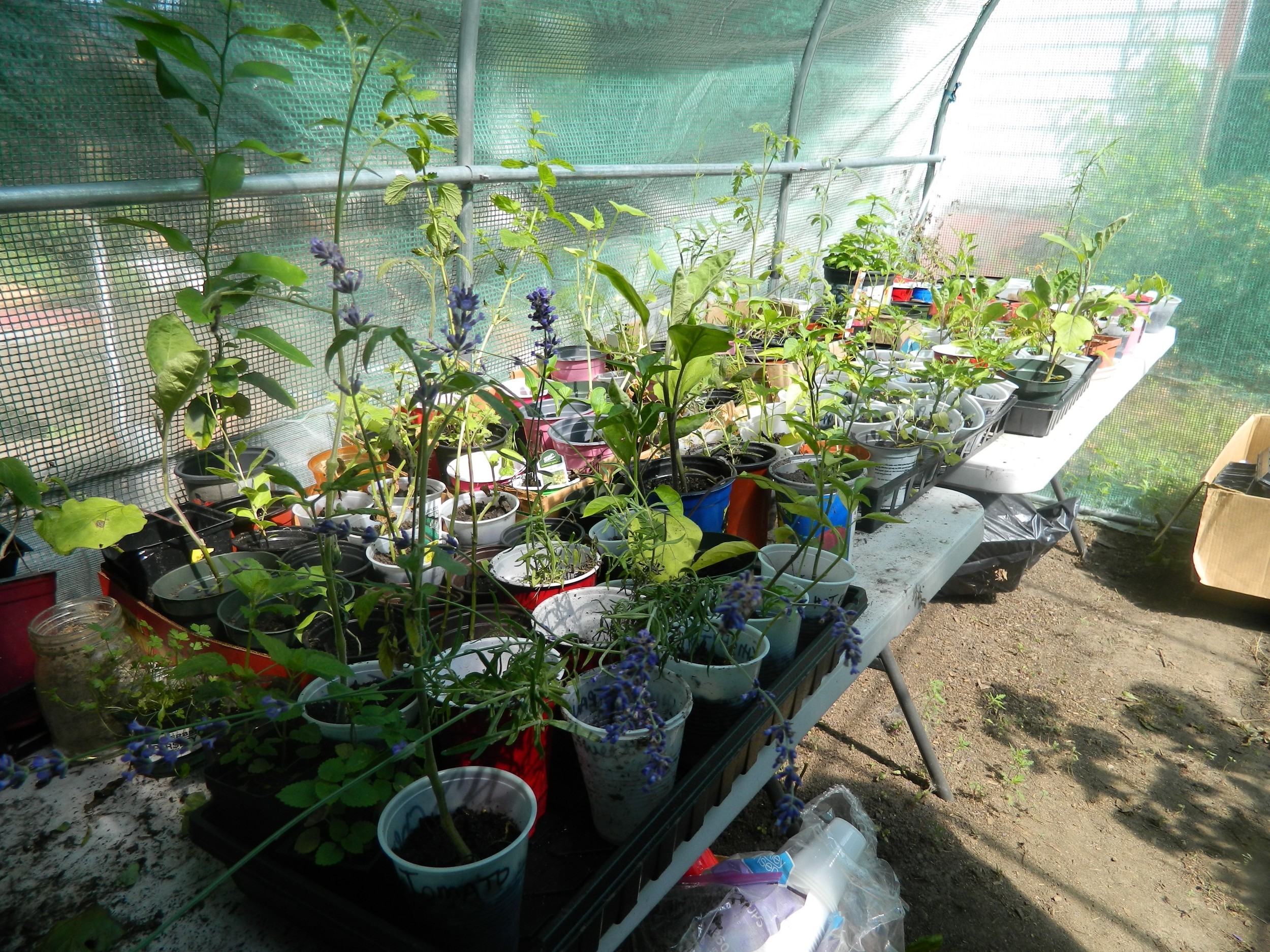 A greenhouse was added to the garden last year in order to produce seedlings as well as grow plants like lavender and basil.