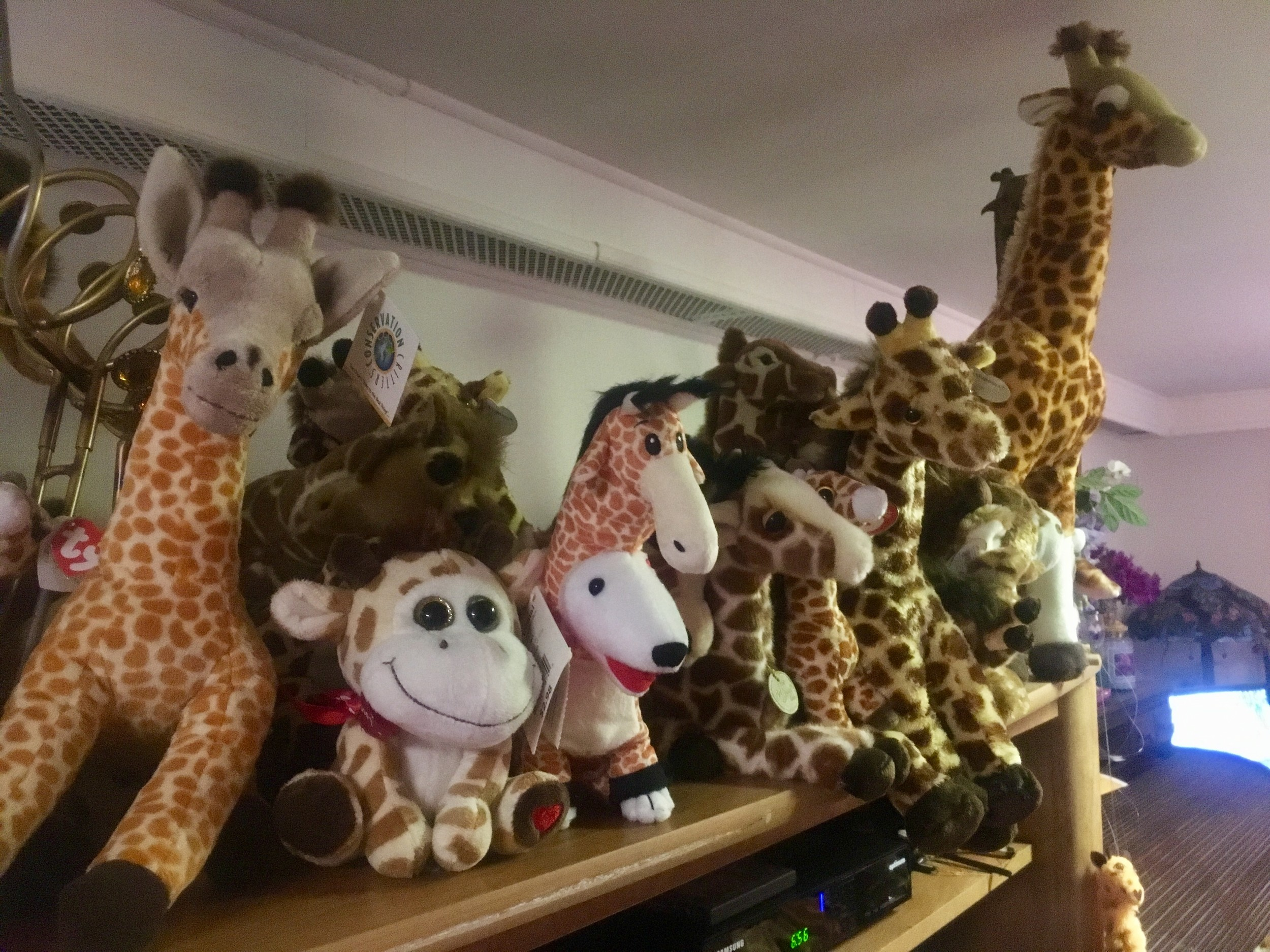 Giraffes are organized thematically on shelves throughout the Susman family home.