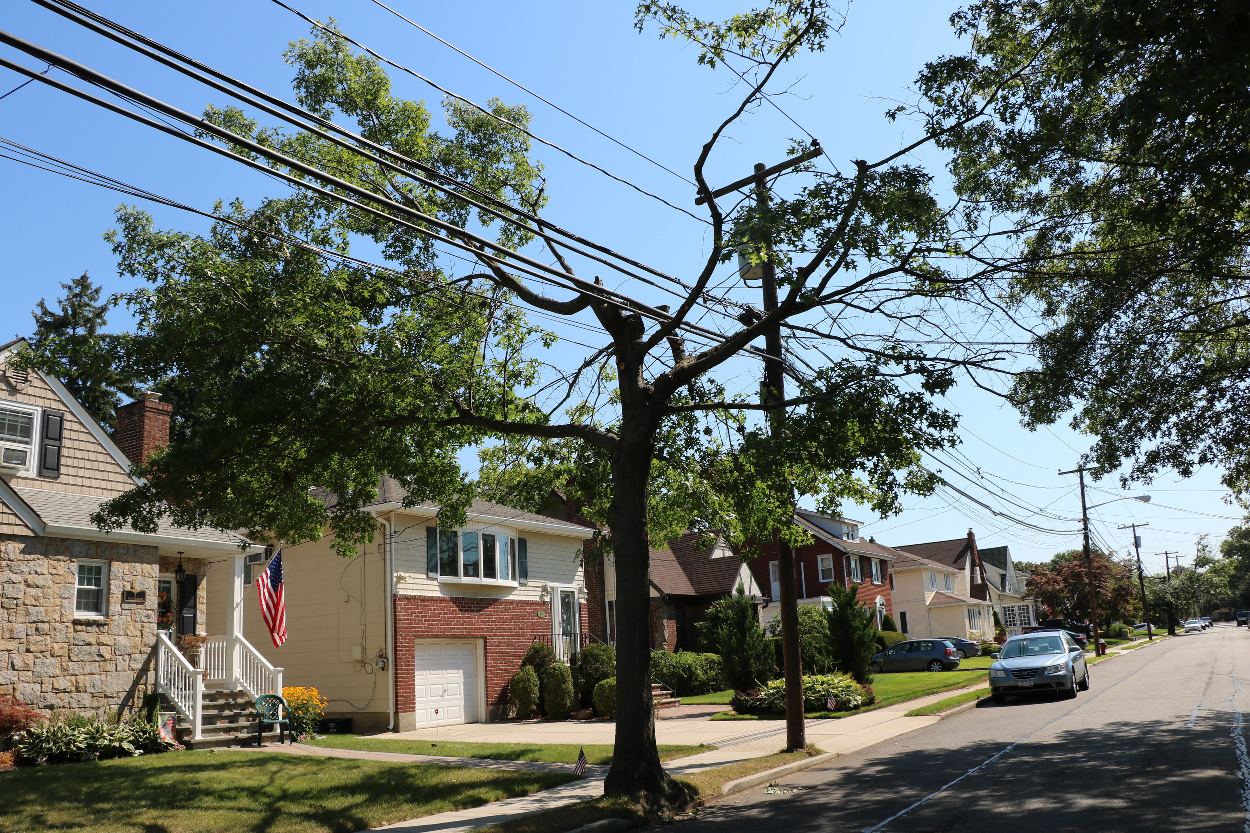 A tree on Nassau Ave. pruned last week by PSEG Long Island contractors.