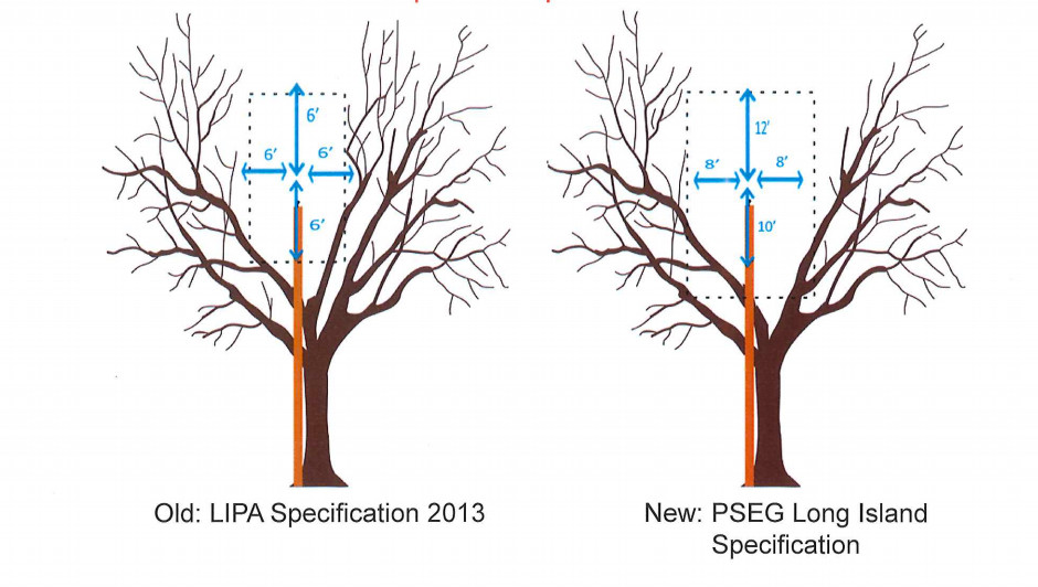 In 2014, PSE&G changed its tree-trimming standards. The clearance zones for branches that are close to primary conductors are now eight feet to the left and right, 12 feet above the conductors and 10 feet below them.