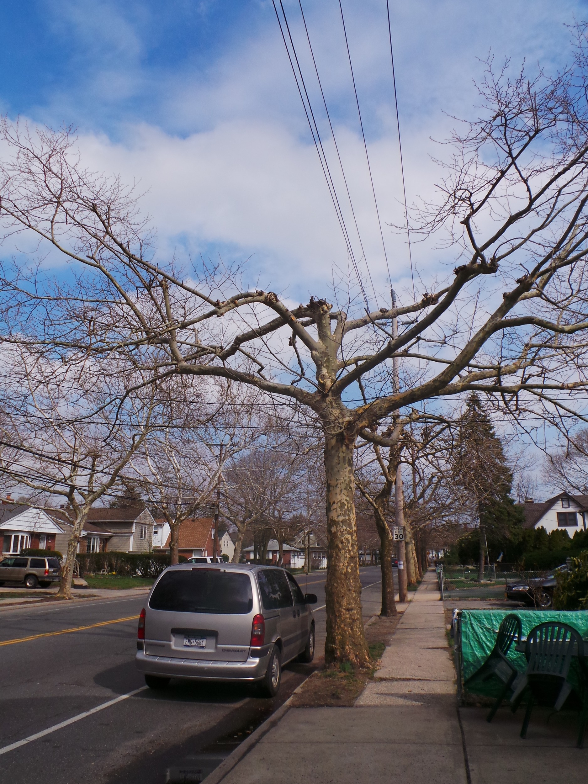Franklin Avenue trees after trimming work in April 2015.