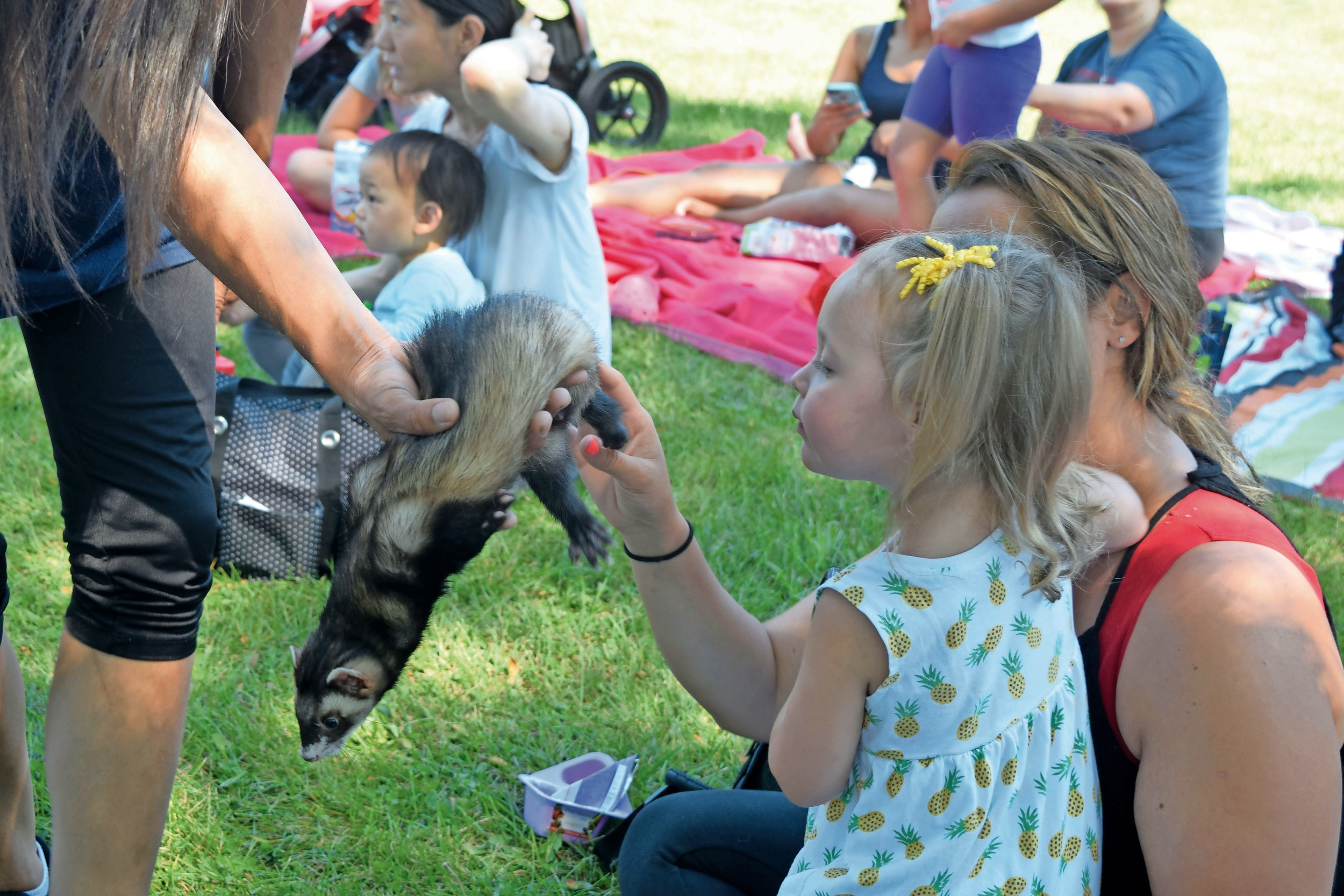 Stacy St. John and her daughter Kylie, 2, pet a ferret.