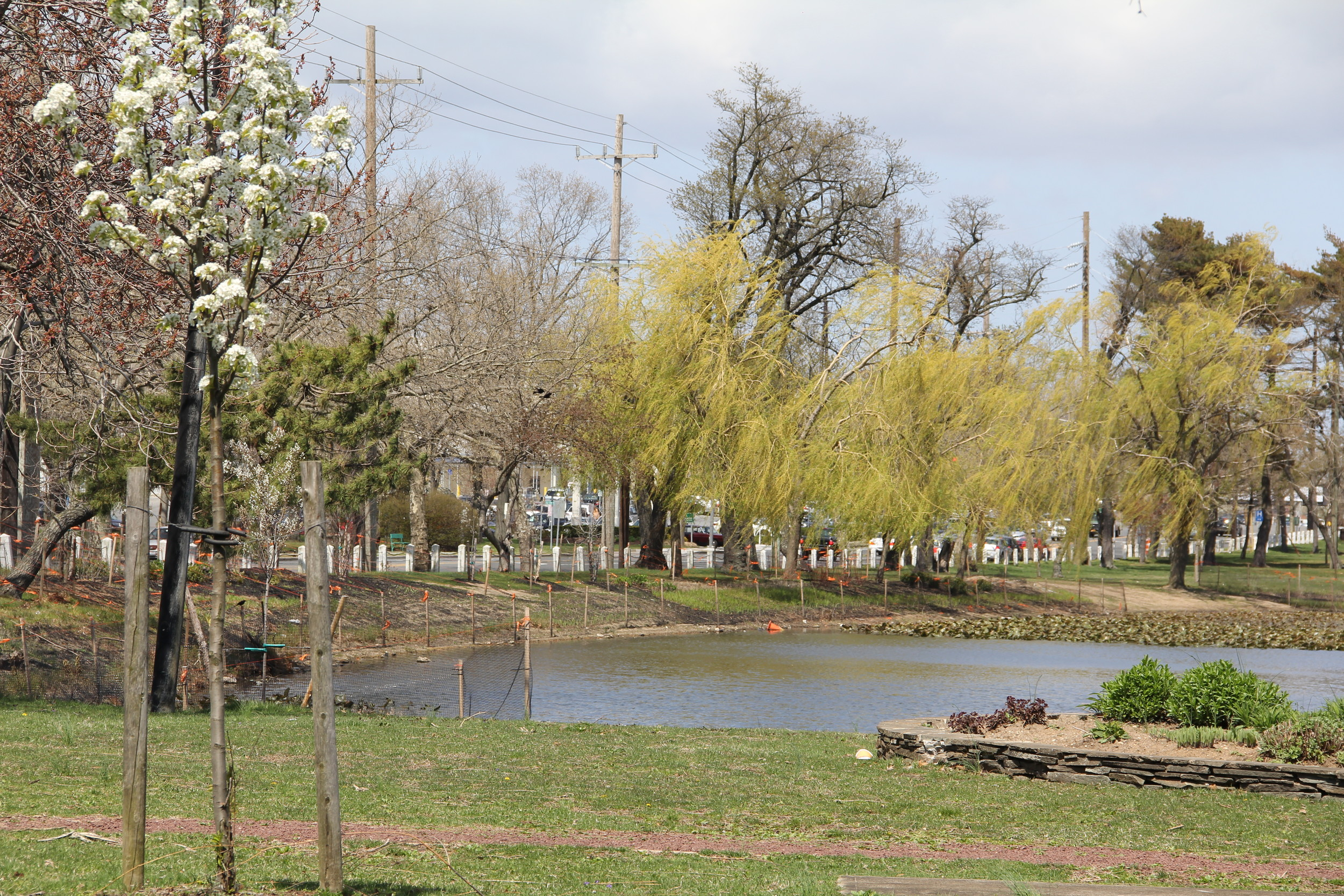 "Designated a ""tree City"" by the Arbor Day Foundation, the Village of Valley Stream is considering requiring permits for cutting down trees on residential property. Above, the tree lined horizon at Edward W. Cahill Memorial Park in 2014."