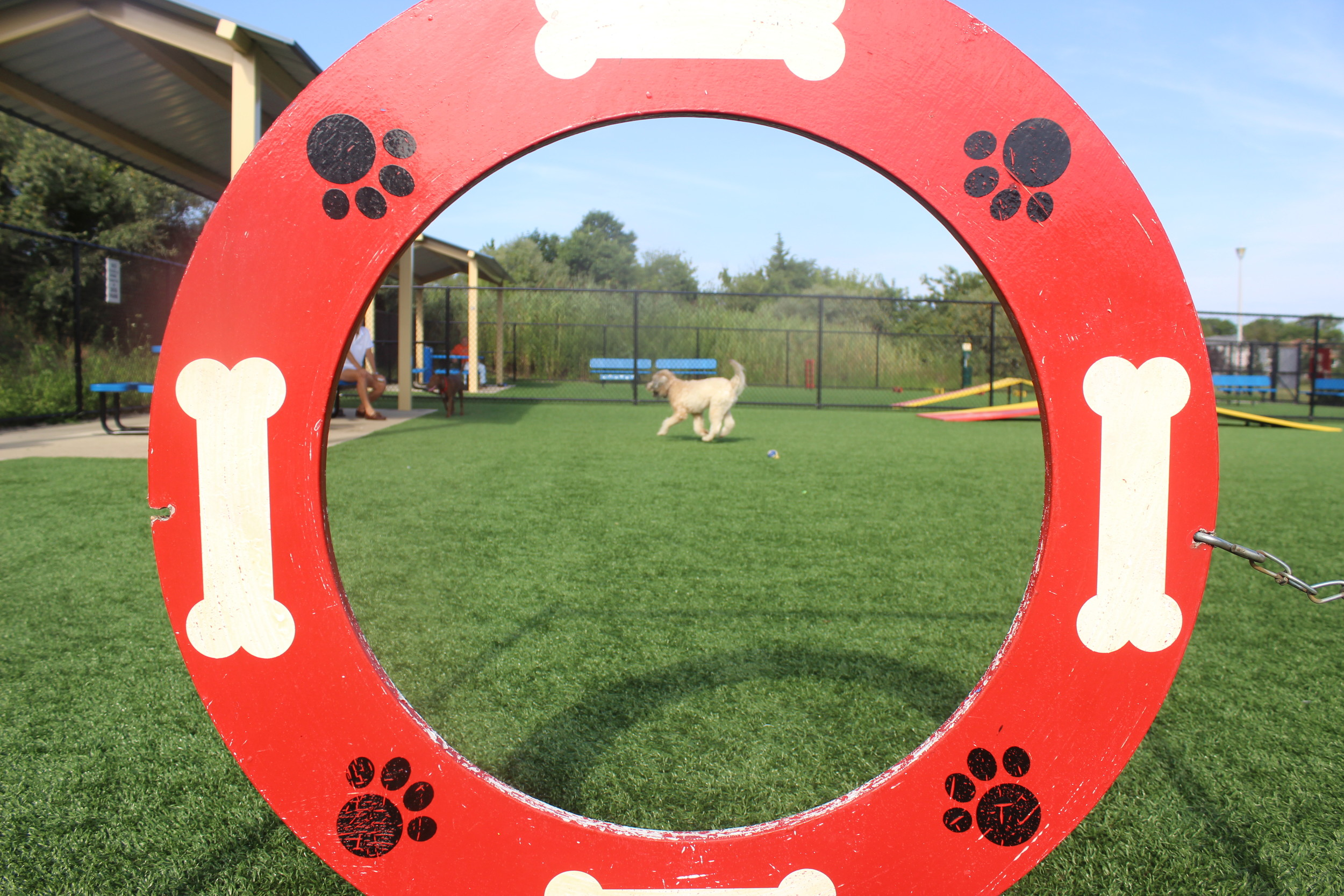 The Town of Hempstead dog park at Newbridge Road Park in Bellmore features obstacles, like the pictured hoop, on which dogs can jump through.