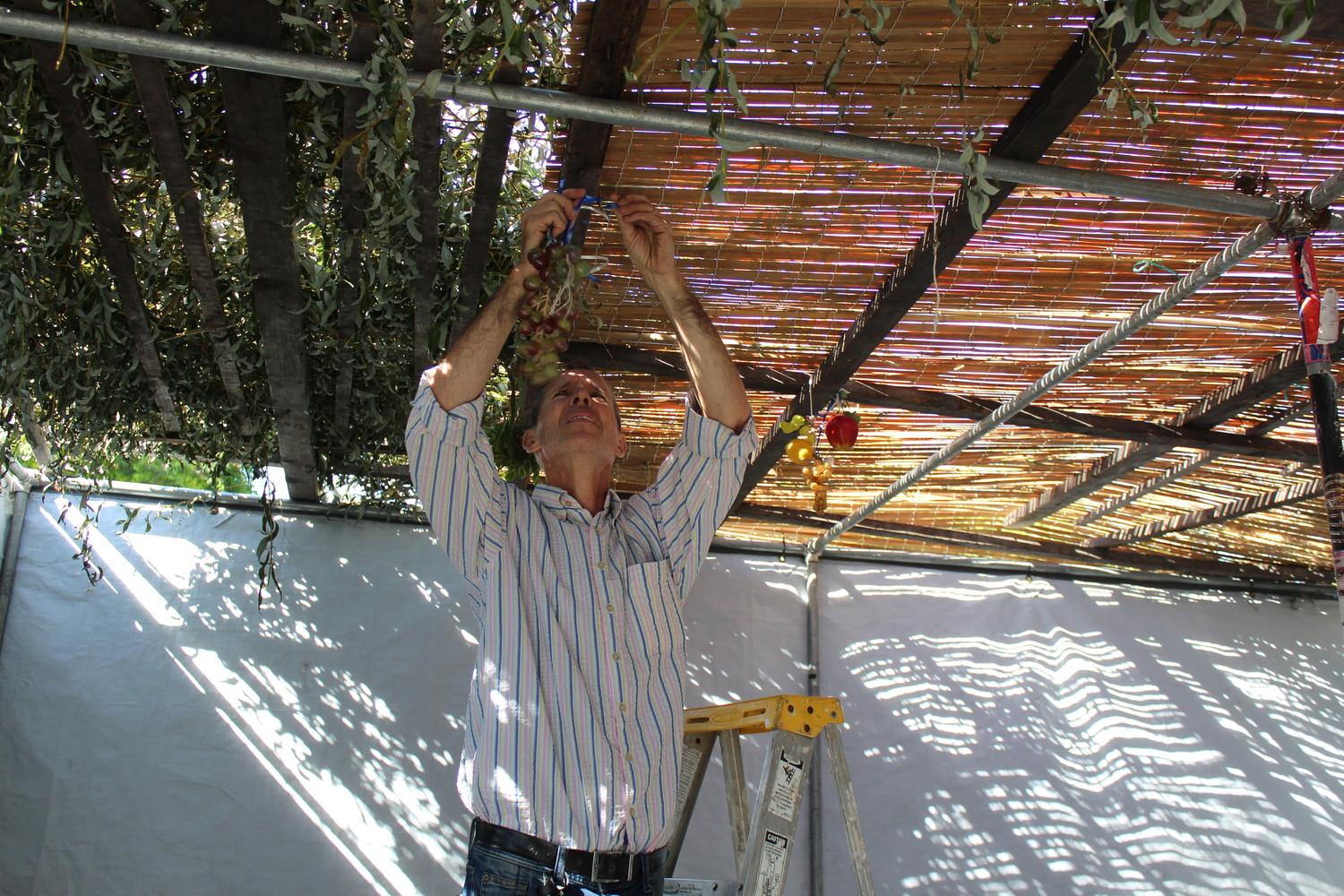 Jose Melosevich hung plastic fruit from the sukkah's ceiling.