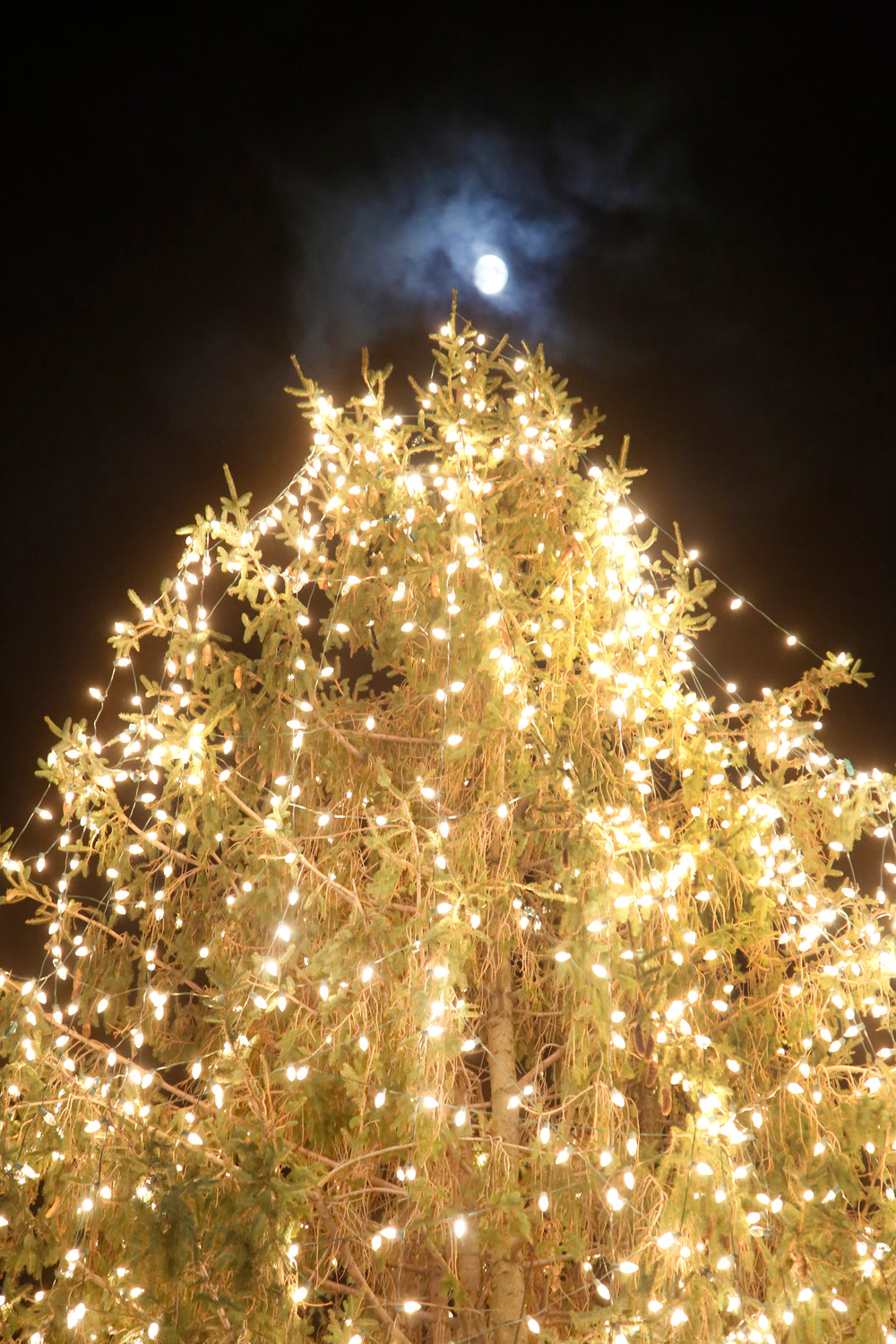 The tree will illuminate the Village Green throughout the holiday season.