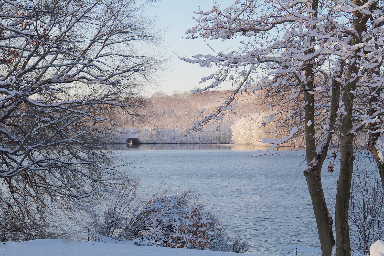 Trees outlined in snow surround Beaver Lake  in Mill Neck.