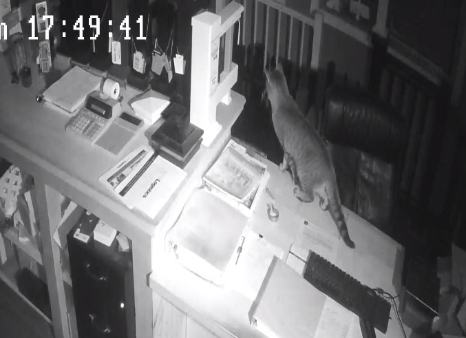 Security camera footage from Oceanside business National Metal Industries showed a feral cat wandering around the property. Owner Mike Levy said the cats, which have an enclosure nearby, are setting off his motion-sensor alarms.