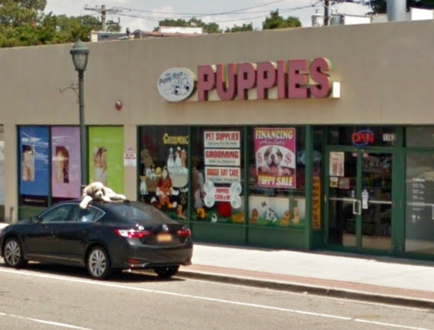 The owner of the Puppy Store, in North Merrick, is fighting animal cruelty charges in court, after Nassau County SPCA detectives allegedly found a malnourished Labrador retriever puppy in a cage in the store's basement.