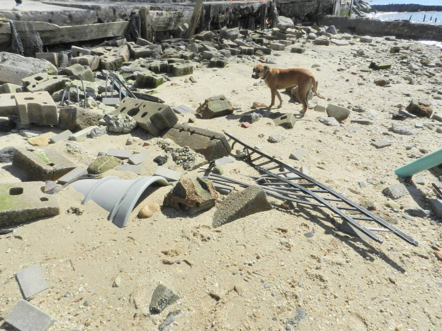 Lee's dog, Juno, inspected concrete cinderblocks and a piece of metal fencing on the beach, which fell from the retaining sea wall above.