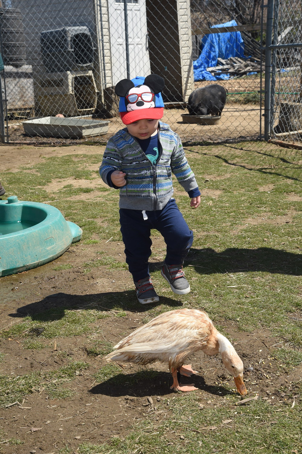 One-year-old Liam Pereira fed the duck at the farm's petting zoo.