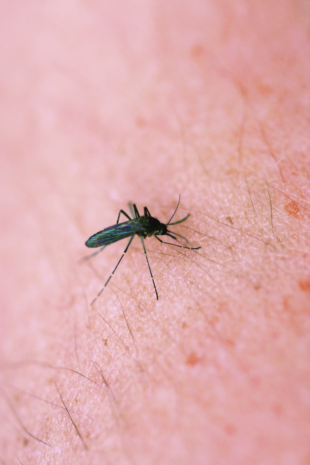 Mosquitoes and other flying pests impact many Five Towns residents' quality of life during the summer.