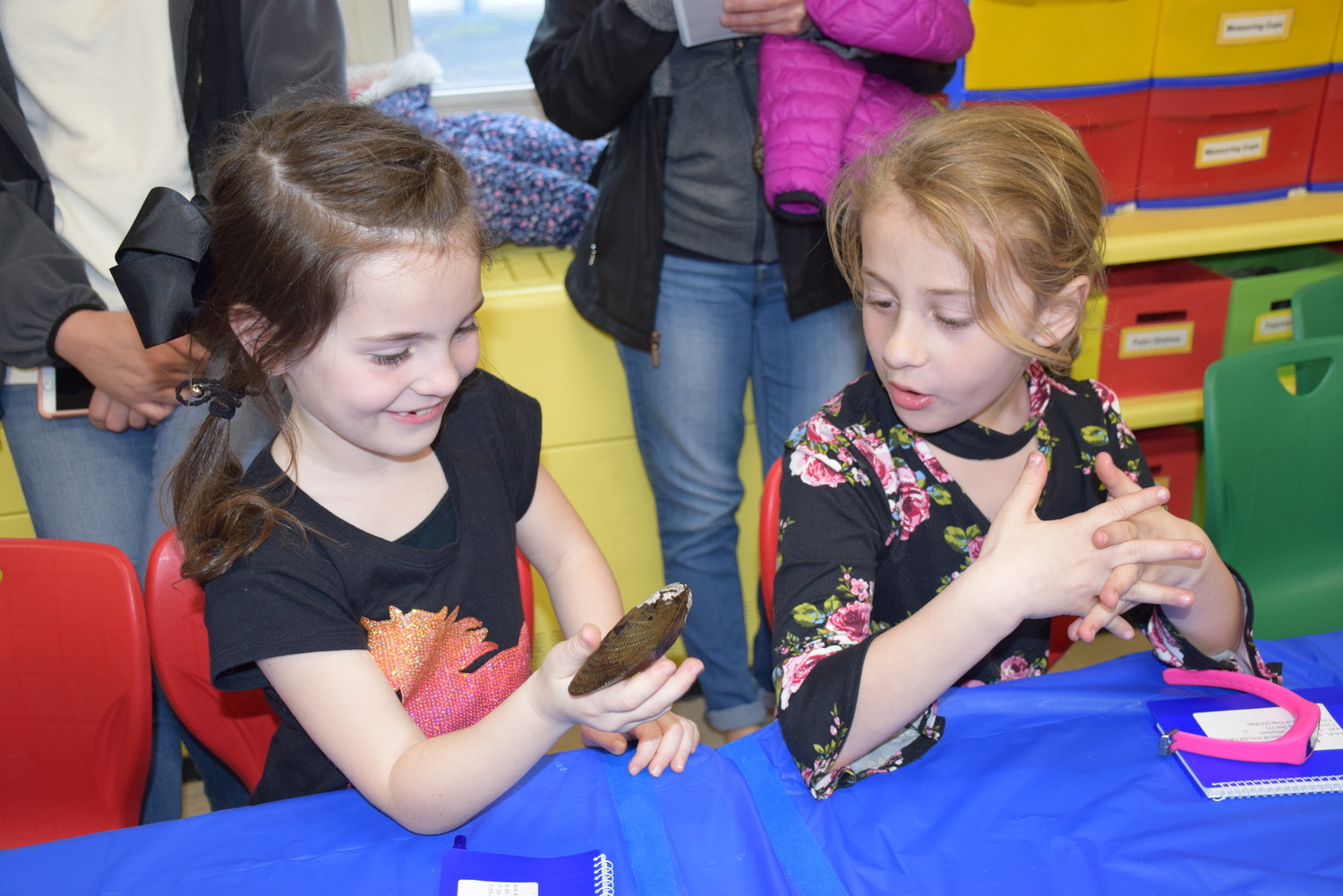Mandalay Elementary School students Isabella Conforte, left, and Mia Rispoli examine a clamshell during an ecology activity at the school's STEAM night on April 24.