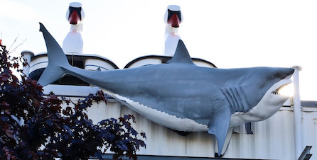 This giant Great White Shark used to rest atop a building in Valley Stream until the town gave them a cease and desist order. The owner knew Jimmy would give the shark a good home at his shop. It currently sits at the top of the building on buffalo ave in front of two giant swan paddle boats.