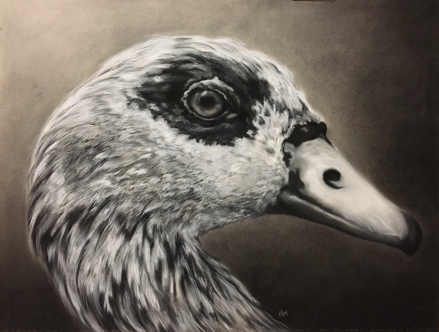 """Egyptian Goose,"" by art teacher Erica Perjatel-Stolba, was inspired by her obsession with birds."