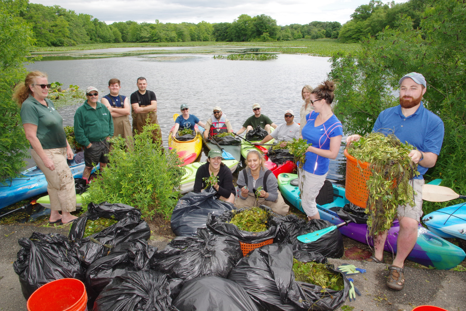 NYS Department of Environmental Conservation staff and volunteers hand-removed hundreds of pounds of the invasive plant species — water chestnut — from Mill Pond in Wantagh because the plant can harm the fish in the pond.