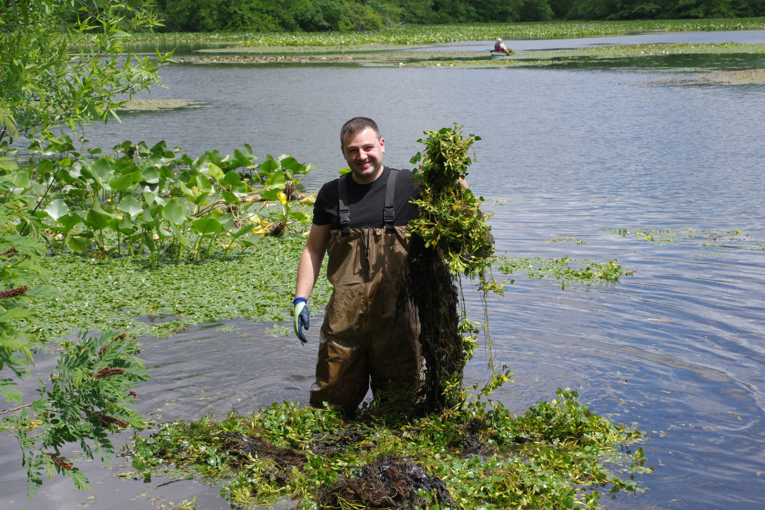 David Ganim from NCSDW holding harmful Water Chestnut plant from pond.