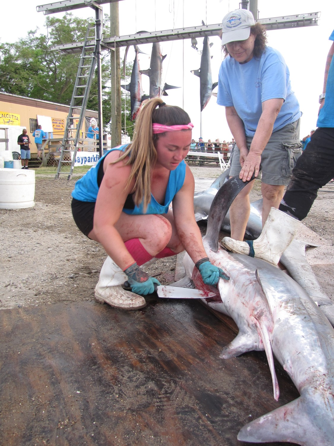 After the shark was weighed and measured Frances Barrella, left, prepared the shark for Nancy Kohler, of the National Marine Fishery Service to examine the insides.