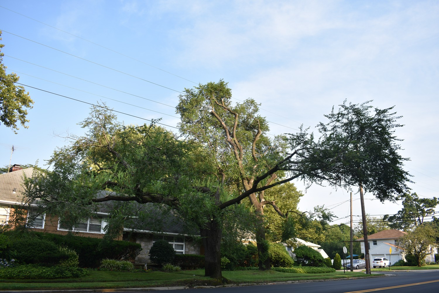 One expert arborist said that some of the remaining tree limbs, like this one on Brookside Drive near the Baldwin-Freeport border, are now more likely to break during a storm.