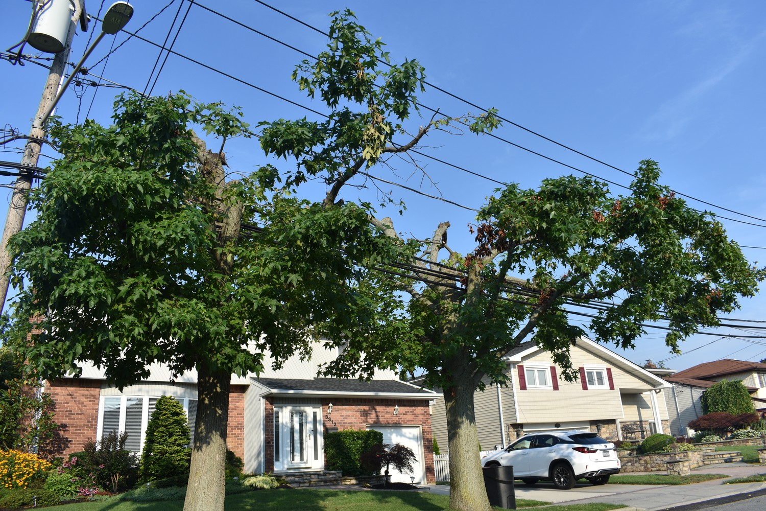 "Shelia Jasper describes her street-side trees as something out of a ""haunted house movie."""