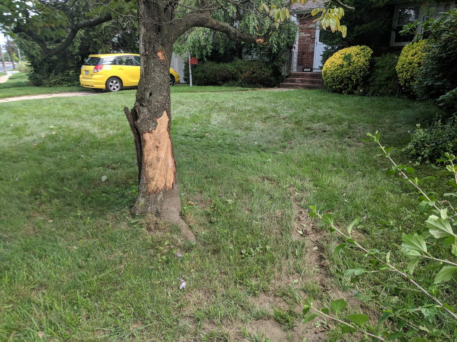 The tree the motorcyclist struck.