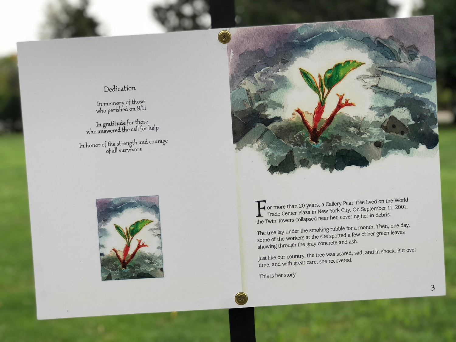 The story of the tree that survived the collapse of the World Trade Center on Sept. 11, 2001, is posted around the Village Green.