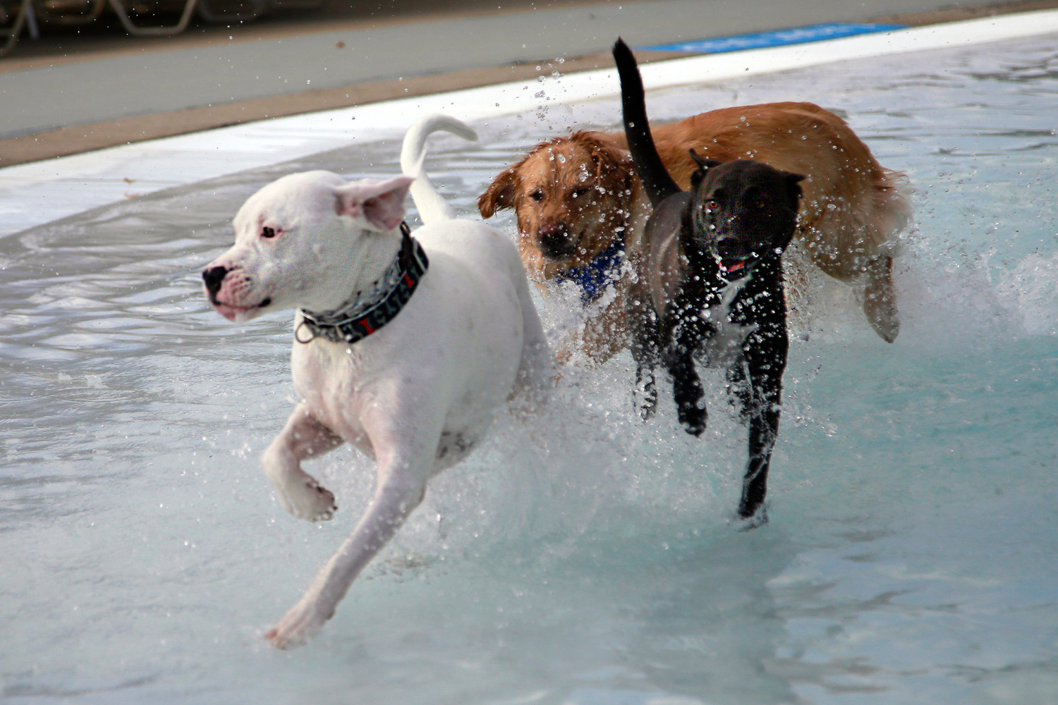 Dogs got the opportunity to frolic through the splash pool at Arthur J. Hendrickson Park for the village's fourth annual Doggie Pool Party.